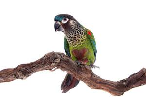 bird-genetics-contact
