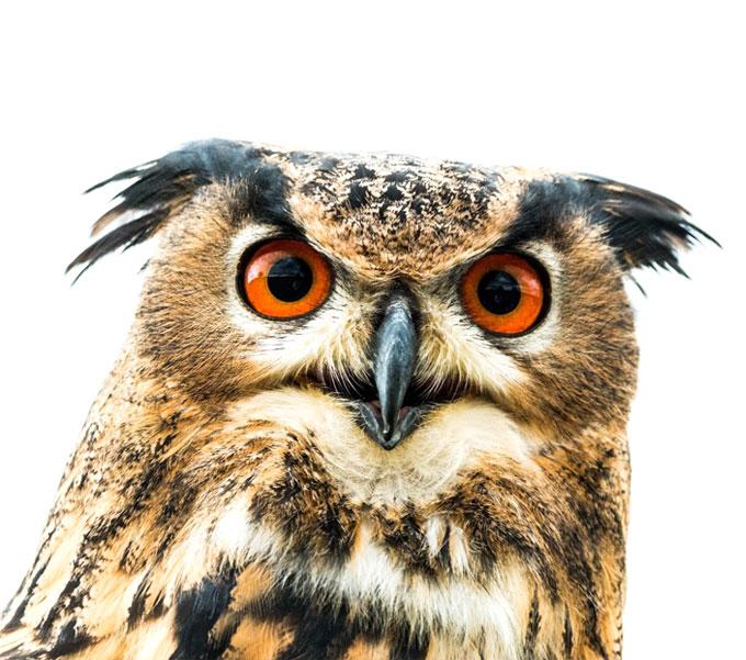 bird-genetics-homepage-uil