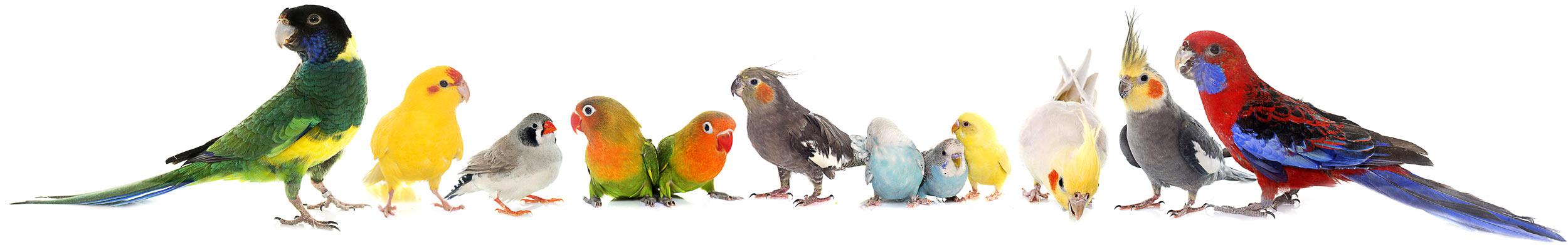 homebg-birdgenetics